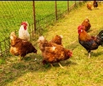 Poultry Farming: An Overview