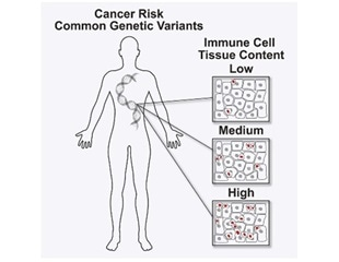 Researchers identify genetic variants that predispose to cancer