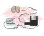 Researchers identify genes involved in the development of malignant brain tumor