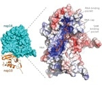 Understanding the structure of SARS-CoV-2 proteins may lead to novel drugs