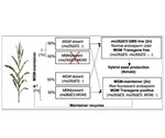 Scientists develop new genome editing methods for better crop yield