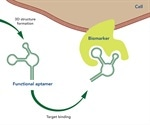 What are Aptamers?