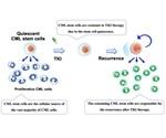 Researchers identify new way to treat chronic myelogenous leukemia