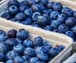 Polyphenolic compound extracted from blueberry can treat inflammatory bowel disease