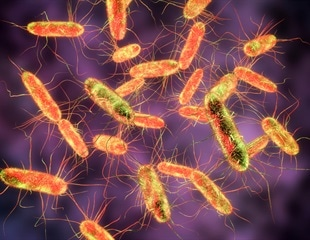 Researchers identify new mechanism that protects against Salmonella infection